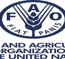 FAO : nomination d'un nouveau DG en juin 2019