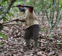 COTE D'IVOIRE-GHANA : Nestlé en action pour mettre fin à la déforestation et restaurer les forêts