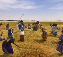 Quand la modélisation assiste l'agriculture et prévient les crises alimentaires