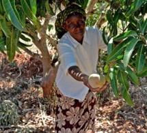 A Daga Birame, Kaffrine, le village climato-intelligent change le comportement des producteurs