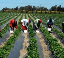Le Fida décline les objectifs de son Programme d'options stratégiques pour le Sénégal (COSOP 2019-2024)