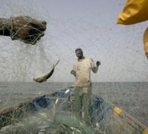 Un nouveau rapport de la Fao invite à une meilleure gestion des petits pélagiques en vue d'améliorer la sécurité alimentaire et la durabilité des écosystèmes