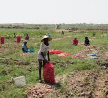 Sénégal : près de 40 milliards FCFA de la Bad pour soutenir un projet de valorisation des eaux pour le développement des chaînes de valeur agricoles