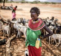 Lancement du rapport alarmant du GIEC sur le lien entre changement climatique, terres et alimentation
