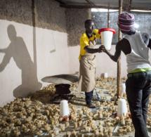 Lancement d'une nouvelle initiative phare visant à augmenter les emplois des jeunes dans l'agriculture et l'agroalimentaire en Afrique