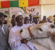 Journée nationale de l'élevage : quelle approche pour un développement durable de ce sous-secteur ?