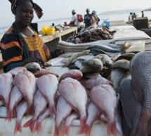 Pêche et aquaculture : une hausse de 204 millions de la production de poissons attendue en 2030