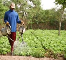 Semences : ces graines pourraient aider l'Afrique à faire face à la crise alimentaire due au covid19