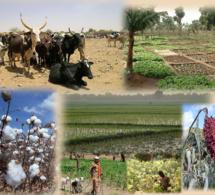Zone Uemoa : les secteurs du coton, du maïs et de l'élevage plus compétitifs et plus rentables pour les exploitant agricoles