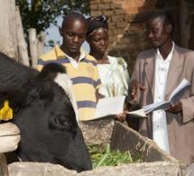 Elevage en Afrique : de la nécessité d'investir dans les domaines critiques qui amélioreront la qualité sur l'ensemble de la chaîne de valeur
