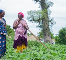 Le Coraf conduit une étude d'impact covid19 sur les systèmes alimentaires de 5 pays sahéliens dont le Sénégal