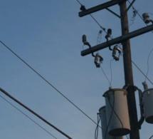 Accès universel à l'électricité: la Banque mondiale travaille sur deux projets additionnels avec le gouvernement du Sénégal