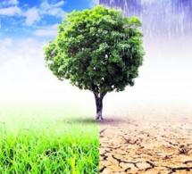 Quel lien entre sensibilité au climat et rendement des obligations des entreprises privées dans la zone euro ?