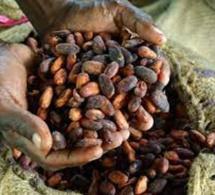 Production de cacao en Côte d'ivoire et au Ghana: pourquoi les agriculteurs ne récoltent pas les fruits de leur production