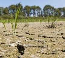 Afrique: publication d'une nouvelle boîte à outil pour éduquer les jeunes sur les impacts locaux du changement climatique