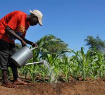 Comment un traité continental peut favoriser le commerce durable de la biodiversité en Afrique