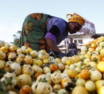La Fao lance l'action mondiale liée à l'initiative un pays – un produit prioritaire.