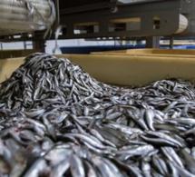 Sénégal: l'implantation de nouvelles usines de farine et d'huile de poisson inquiète les populations