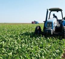 Agriculture-Sénégal : le conseil national du crédit muet sur les difficultés de financements des campagnes de production agricole 2021 et de la préparation des campagnes de commercialisation 2021-2022