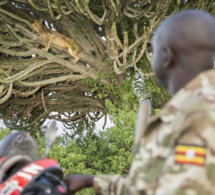 Jimmy Kisembo, un garde forestier de l'Uganda Wildlife Authority regarde un lion lors de sa patrouille de surveillance quotidienne dans le parc national Queen Elizabeth, en Ouganda. Alex Braczkowski , Auteur fourni