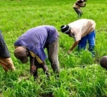L'agriculture, levier performant du Plan Sénégal Emergent