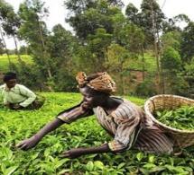 Omc : accord sur l'élimination des subventions à l'exportation agricole