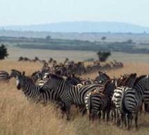 Parcs et réserves en Afrique, une richesse inestimable pour le tourisme
