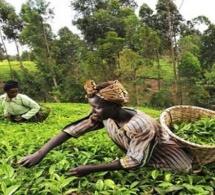 Omc : le comité de l'agriculture surveillera la mise en œuvre de la décision de Nairobi