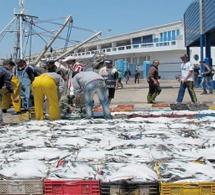 Maroc : augmentation de plus d'un tiers des débarquements de la pêche côtière et artisanale