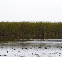 Non à la mort programmée du fleuve Sénégal et de ses affluents
