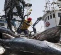 Lutte contre la pêche illicite : la presse en renfort